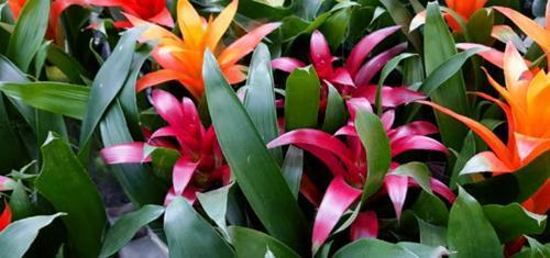 15 impresionantes plantas de interior con poca luz que florecen