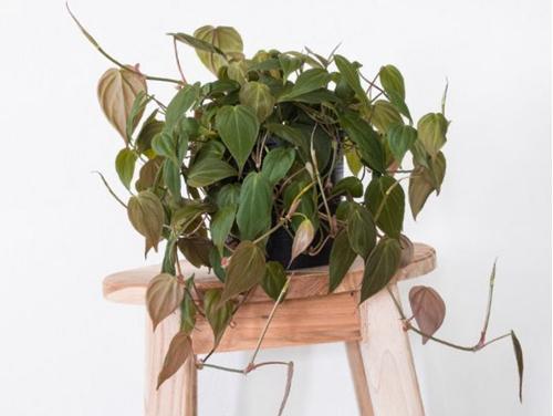 15 plantas de interior fáciles de reproducir (con fotos)