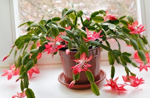 17 hermosas plantas de interior seguras para los gatos (con fotos)