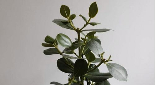 18 plantas de interior de crecimiento rápido que tienen un aspecto fantástico
