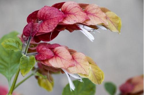19 plantas de interior con flores impresionantes