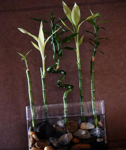 21 hermosas plantas para casas orientadas a norte (con imágenes)