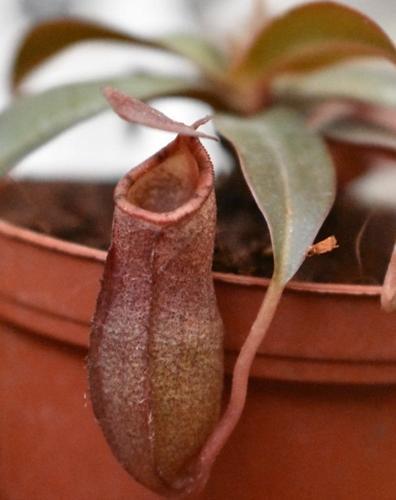 23 de las mejores plantas para el baño que se ven fantásticas