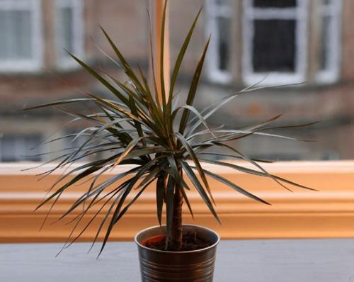 25 plantas de interior difíciles de matar que prosperarán en tu casa