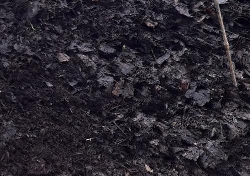 6 grandes alternativas al musgo de turba para sus plantas