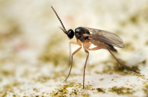 6 maneras de deshacerse de hongos gnats en las plantas de interior