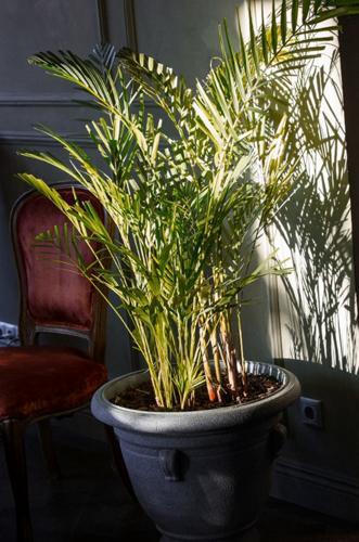 Cómo arreglar una planta regada en exceso - Guía paso a paso