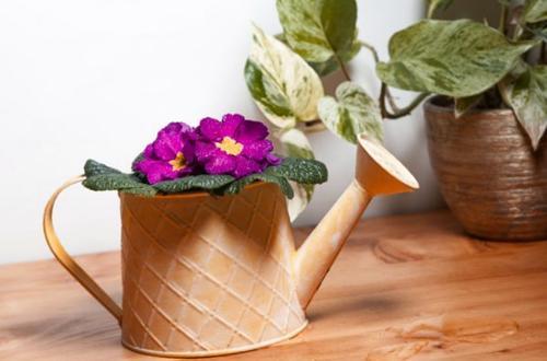 Cómo conseguir que las violetas africanas florezcan todo el año