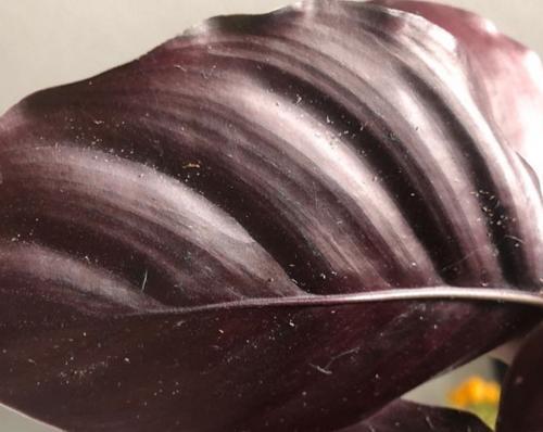 Cómo deshacerse de los ácaros en las plantas de interior