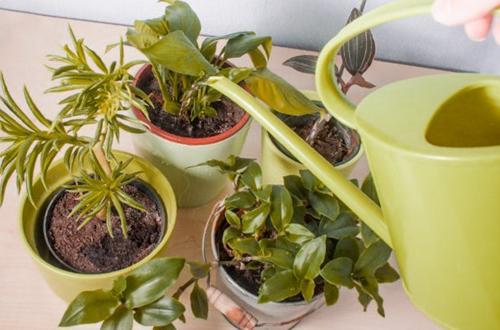 Cómo deshacerse del moho en la tierra de plantas de interior