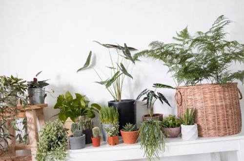 Cómo podar las plantas de interior - Guía completa