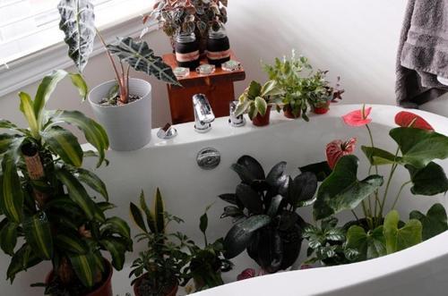 Cómo regar las plantas de interior durante las vacaciones