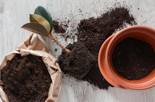 Cómo reproducir plantas de interior: Guía completa con imágenes