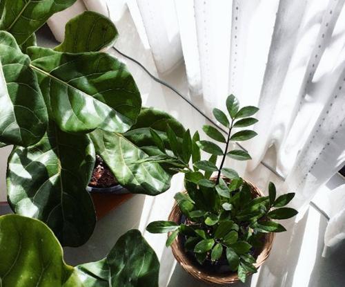 Comprender las necesidades de luz de las plantas de interior