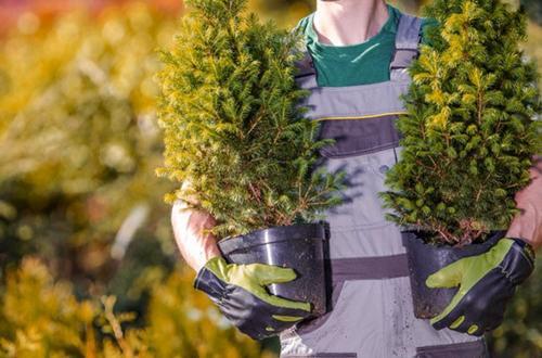 ¿Crecen las plantas por la noche?