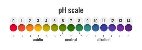 ¿Cuál es el mejor pH para el cultivo hidropónico?