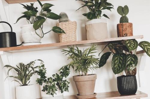 ¿Cuál es la mejor agua para las plantas de interior?