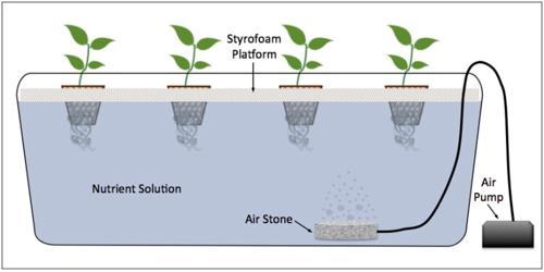 ¿Cuáles son los tipos de sistemas hidropónicos?