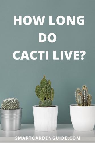 ¿Cuánto viven los cactus?