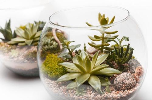 Cuidados de un terrario abierto: Plantas perfectas y problemas comunes