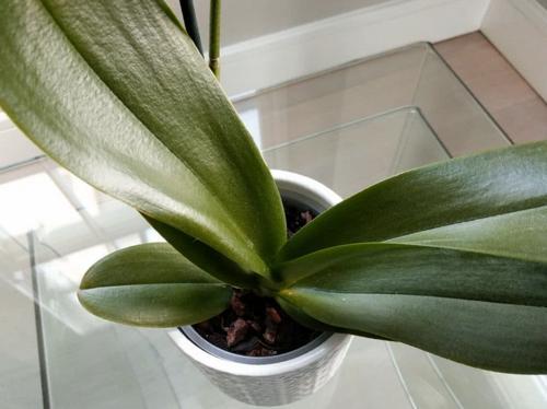 ¿Deberías puleverizar las orquídeas? ¡Alternativas con creatividad!