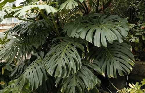 Explicación de los nombres de las plantas en latín: Guía de los nombres botánicos de las plantas