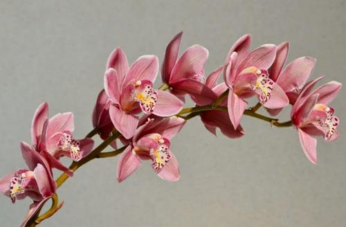 Las 15 plantas de interior que mejor huelen: como tener un hogar con un perfume natural