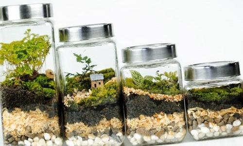 Las capas del suelo del terrario y sus funciones (con imágenes)