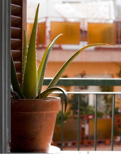 ¿Por qué mi planta de Aloe Vera se está volviendo marrón? (9 soluciones fáciles)