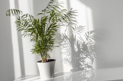 ¿Pueden las plantas sufrir por demasiada luz?