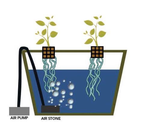 ¿Qué es el cultivo hidropónico en aguas profundas?