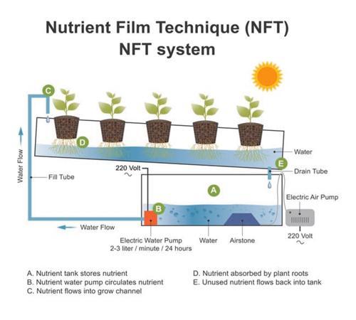 ¿Qué es el cultivo hidropónico NFT? Guía de la técnica de la película de nutrientes