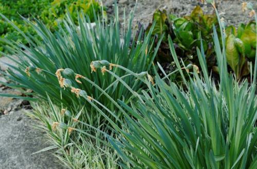 ¿Qué es el letargo de las plantas? (Y 7 consejos para el cuidado de las plantas en letargo)