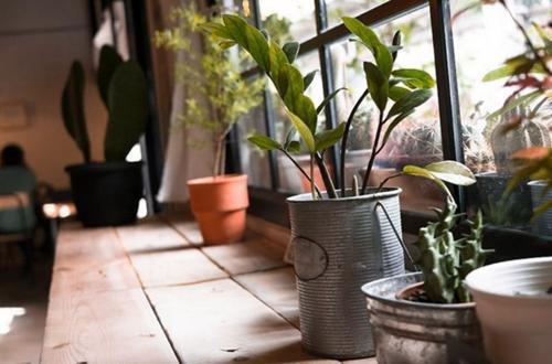 Qué es y efectos de la luz indirecta para las plantas