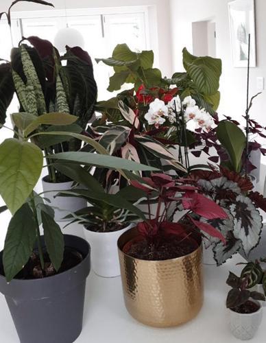 Qué macetas usar para las plantas de interior: Tipos