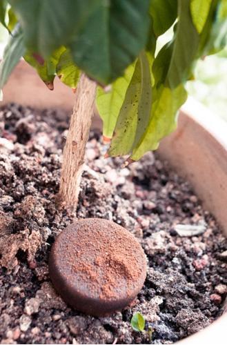 ¿Se pueden utilizar los posos del café para abonar las plantas de interior?