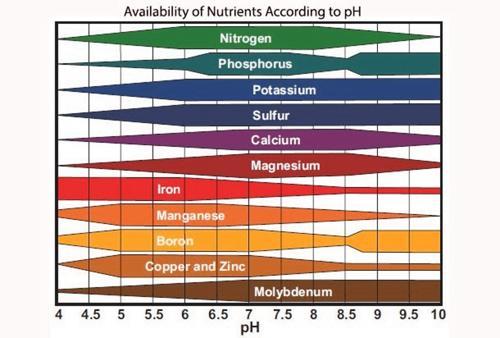 Solución nutritiva hidropónica (Guía fácil)